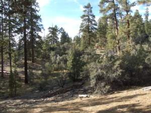Big Bear Woodland Trail