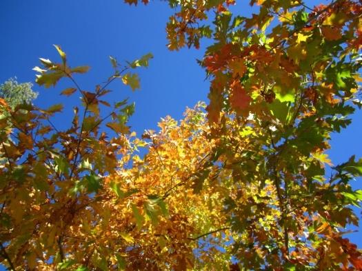 Autumn in Big Bear