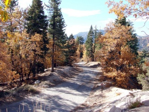 Fall trail in Big Bear California