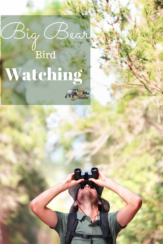 Big Bear bird watching